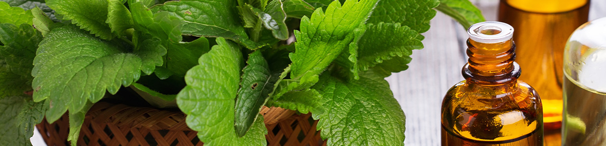 Jenier Herbal Leaves