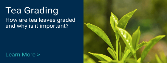 Guide to Tea Leaf Grading Terms